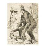 تکامل و ژنتیک