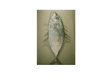 اطلس ماهیان دریایی خلیج فارس و دریای عمان 1