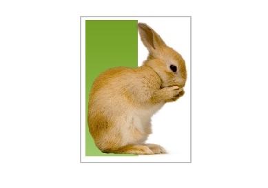 راهنمای نگهداری خرگوش 1