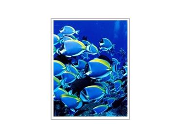 دنیای زیر آب 1