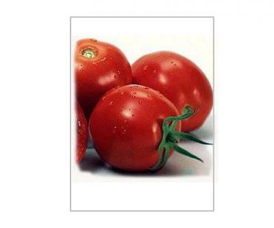 روشهای کشت گوجه فرنگی در گلخانه