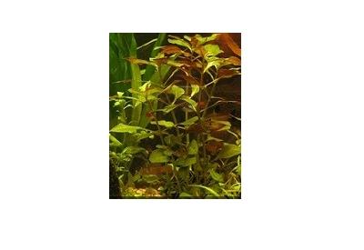 گیاهان آبزی دانشگاه پیام نور